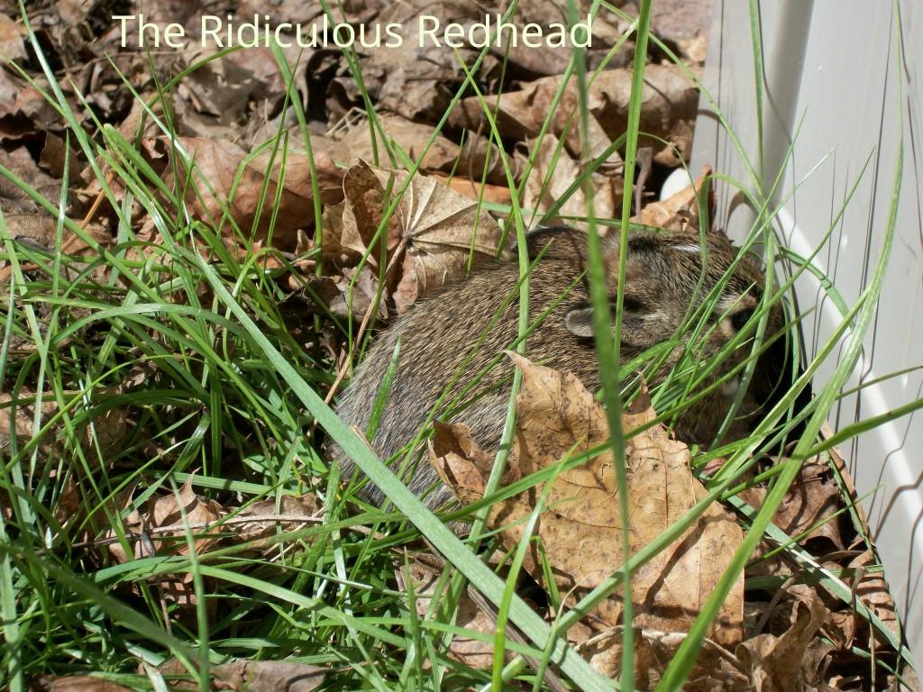 RR bunny nest 0116