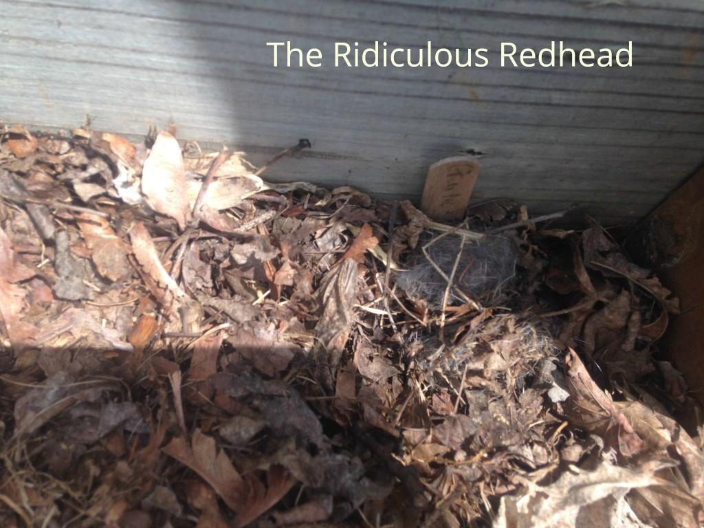 RR bunny nest 5282