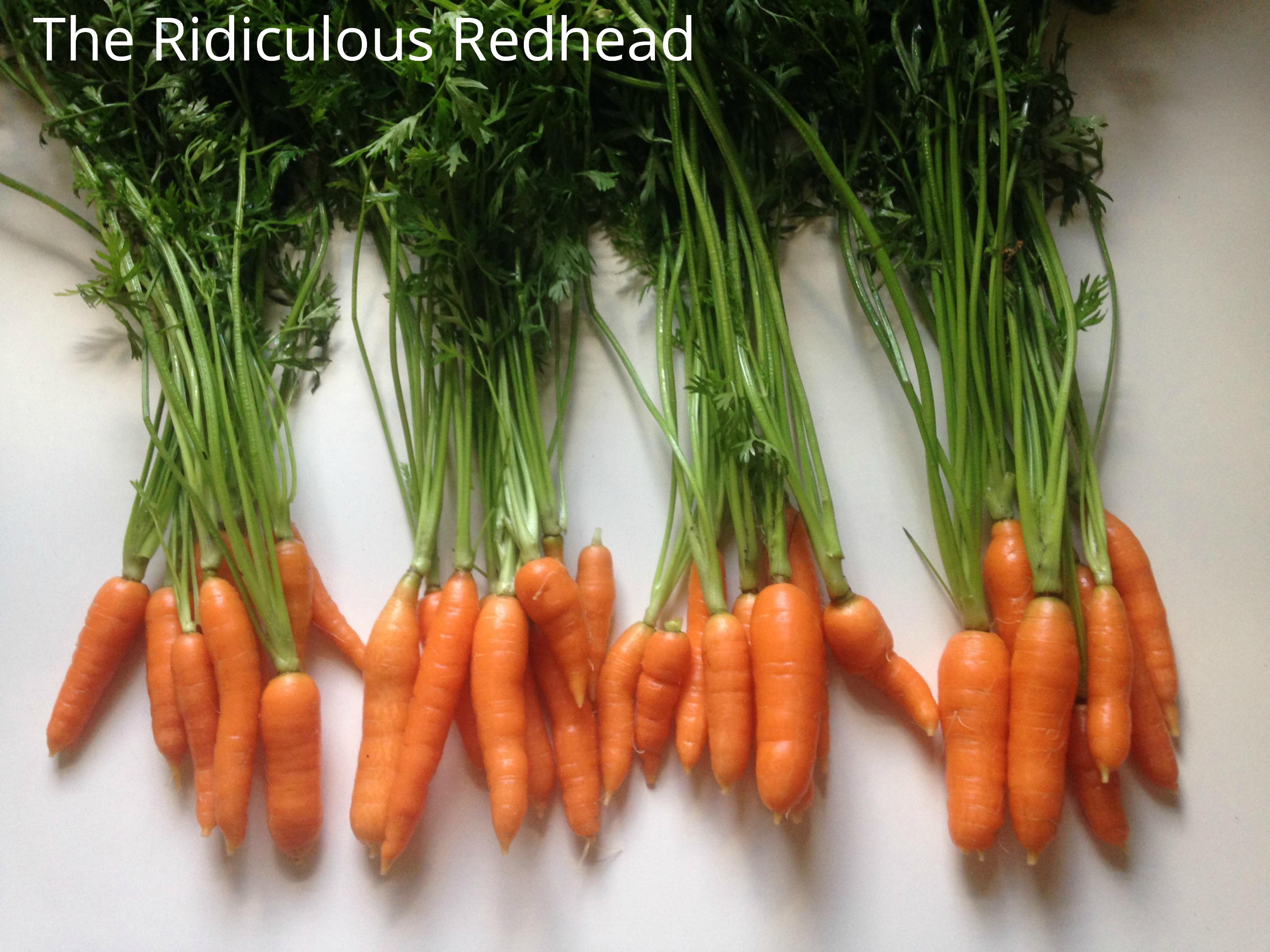 Ridiculous Redhead Carrots