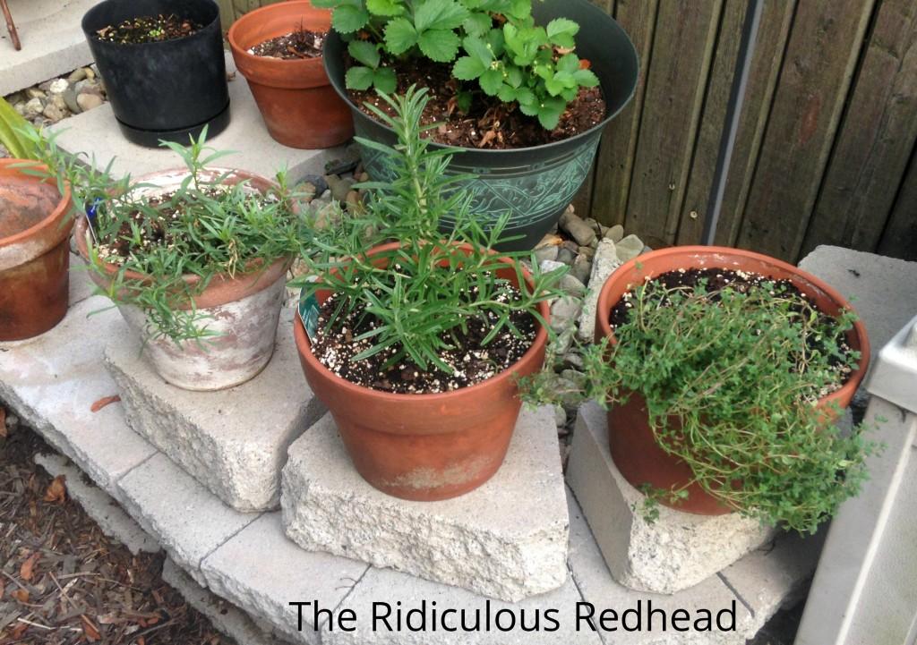 Ridiculous Redhead Herbs