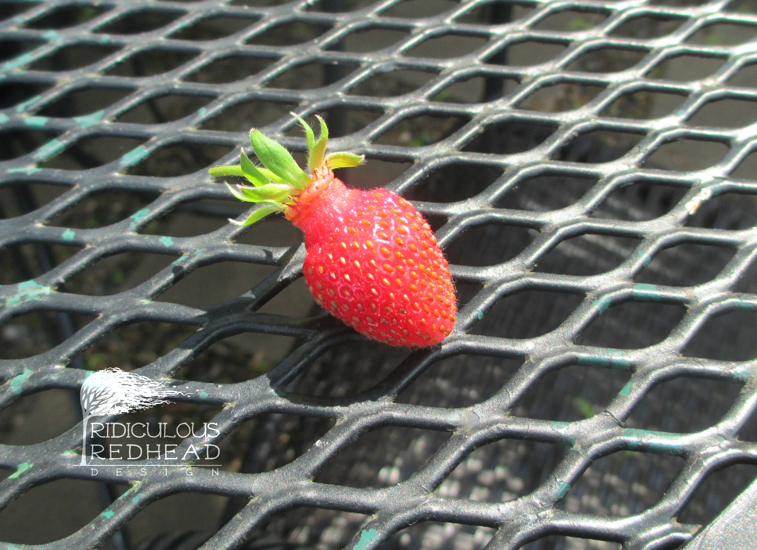 Ridiculous Redhead First Strawberry
